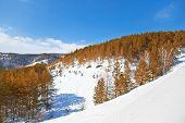 Paisagem de Inverno de bonito