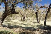 Darling River, Australia