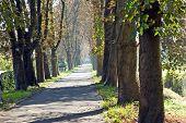 Chestnut Alley autumn