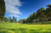 Beautiful Meadow With A Pine Tree