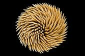Spiral Toothpicks In Black Background