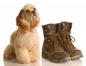 Hunting Dog Sitting Beside Boots