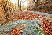 Árvores de outono por do sol, paisagem de outono