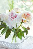Beautiful white peony flowers