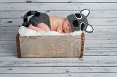 foto of crate  - Five day old newborn baby boy wearing a gray crocheted raccoon costume and sleeping in a vintage wooden crate - JPG