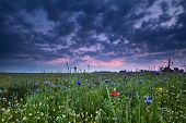 Sunrise Over Field With Wildflowers