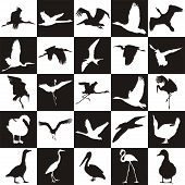 Black And White Background With Aquatic Birds.eps