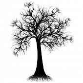 Hermosa silueta de arte árbol aislado sobre fondo blanco