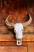 Totem The Bull Skull