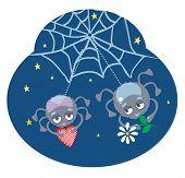 Spider_with_flower.jpg