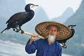 Chinese senior fisherman man with cormorants birds trained  to fish in Yangshuo, Guangxi region, Chi
