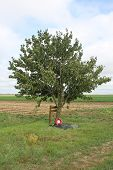 Lone Tree WW1 Loos battlefield France
