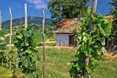 Traditional Vineyard And Cottage In Kalnik