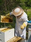 stock photo of bee keeping  - A beekeeper looking at their bee hives - JPG
