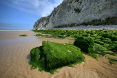 Stones, Overgrown With Green Algae On Sea Coast At Nord-pas-de-calais Region, France.
