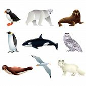 picture of albatross  - Popular Arctic animals high detailed vector collection - JPG