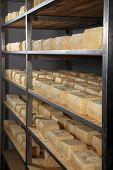 Maturing Cheese Storehouse