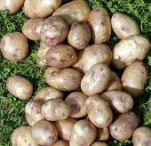 Raw Potatoes.