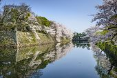 Castle outter moat during the spring season in Hikone, Japan.