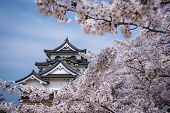 Hikone Castle in Hikone, Shiga Prefecture, Japan.