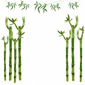 Bamboo Stalks. Place For Inscriptions. Vector Illustration.