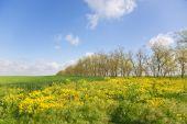 Crimea, Yellow Glade