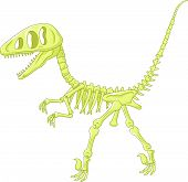stock photo of dinosaur skeleton  - Vector illustration of dinosaur skeleton isolated on white - JPG