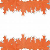 Set Of Maple Leaves