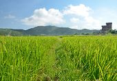 Green Rice Field with Mountains Background under Blue Sky