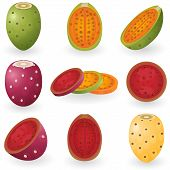 picture of prickly pears  - Vector illustration of prickly pear fruit also known as opuntia - JPG
