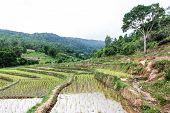 Rice Field Terraces In Doi Inthanon, Ban Mae Aeb Chiangmai Thailand