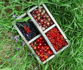 Fresh berries in wooden box on grass, outdoors