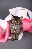 Cute kitten playing with roll of toilet paper,  on gray background