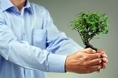 Businessman holding small bonsai tree concept for taking care of new development or the environment