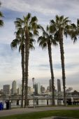 San Diego Through The Palms