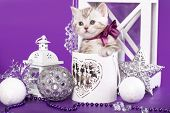 kitten and Christmas decorations