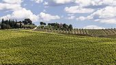 Vineyards Of The Chianti Hills