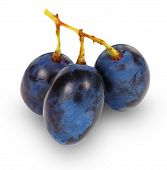 Fresh Blue Grape Fruit