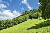 Lush Green Alpine Meadow And Forest