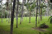 Many Palm Trees On The Bright Green Grass Background.