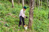 Worker At Rubber Tree Plantation In Thailand