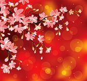 Chinese New Year blossoming background