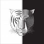 Tiger Half Face