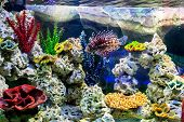 picture of aquatic animal  - The underwater world - JPG