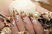 Design with seashells.