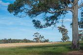 Farmland In The South-west