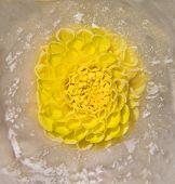 Frozen   Flower Of   Georgina