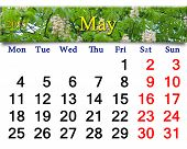 Calendar For May Of 2015 Year With Blossoming Chestnut