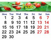 Calendar For June Of 2015 With Berries Of Prunus Tomentosa