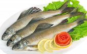 Salted Fish - Grayling